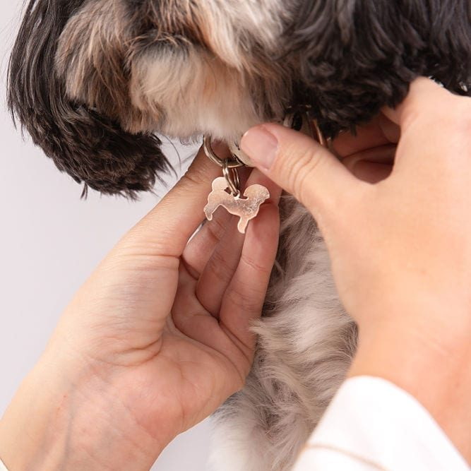 Your Beloved Pet Jewelry Collection